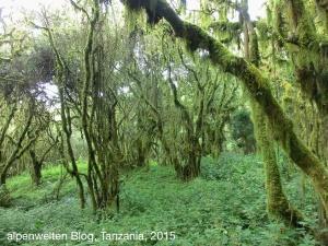 Durch den Regenwald geht es zurück zum Gate, Arusha Nationalpark, Tanzania